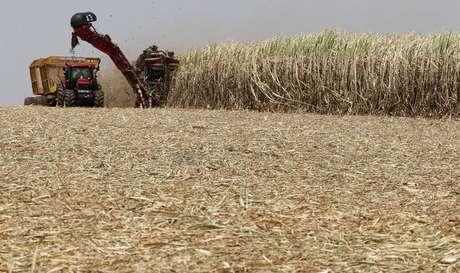 Colheita de cana-de-açúcar em lavoura em Valparaíso, São Paulo 18/09/2014 REUTERS/Paulo Whitaker