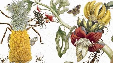 Ainda adolescente, Maria Merian registrou a metamorfose sob a forma de desenhos que capturavam cenas do próprio jardim