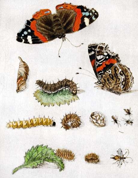 Metamorfose: ovos, lagartas, casulos e, finalmente, borboletas | Imagem: Science Photo Library