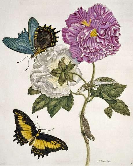 Merian desenvolveu um interesse peculiar que ia além da simples pintura de plantas e insetos | Imagem: Science Photo Library