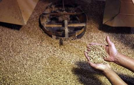 Trabalhador mostra grãos de café em fábrica do Espírito Santo do Pinhal, São Paulo 18/05/2012 REUTERS/Nacho Doce