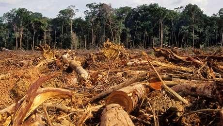 Brasil reduziu em 83% a taxa de desmatamento entre 2004 e 2012, mas, desde então, a área desmatada voltou a crescer