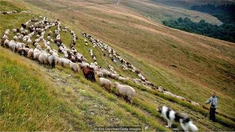 Antigamente, os iogurtes eram produzidos com diferentes tipos de leite cru, como o de búfala e o de ovelha