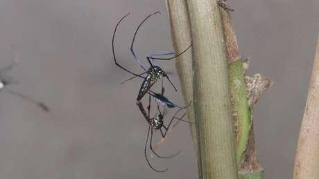 Sem ter macaco para picar na copa das árvores, os mosquitos buscarão alimento nos humanos | Fonte: Josué Damacena/IOC/Fiocruz
