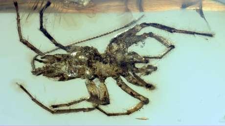 O animal tem uma cauda longa que se assemelha ao que vemos hoje em escorpiões   Foto: Bo Wang