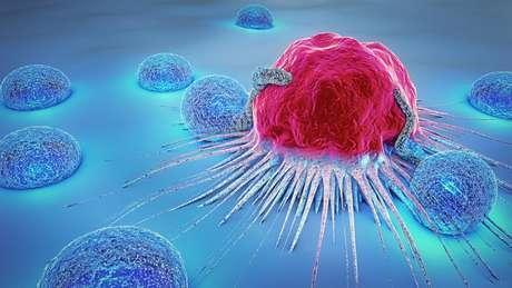 """De acordo com Márcio Chaim, os camundongos que receberam a vacina conseguiram combater as células cancerígenas iniciais, mantiveram uma """"memória"""" sobre elas e as eliminaram quando infectadas pela segunda vez."""