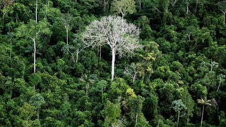 Metodologia pode ser aplicada em mais de 19 milhões de hectares em áreas em diferentes graus de degradação no Pará