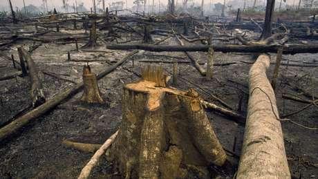 'Se mantivermos este ritmo, vamos negociar a Amazônia inteira, o que seria catastrófico não só para o Brasil, mas para o mundo inteiro', dizem autores do estudo