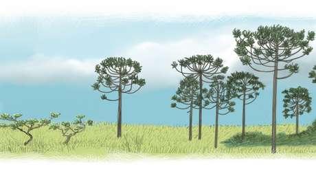 Cerrado e araucárias eram parte da vegetação paulistana | Ilustração: Leandro Lopes de Souza