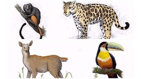 A extraordinária variedade da flora nativa atraía para a região um conjunto igualmente diverso de animais, entre os quais onças-pintadas, tucanos-de-bico-verde, micos-leões-pretos e veados-catingueiros | Ilustração: Leandro Lopes de Souza