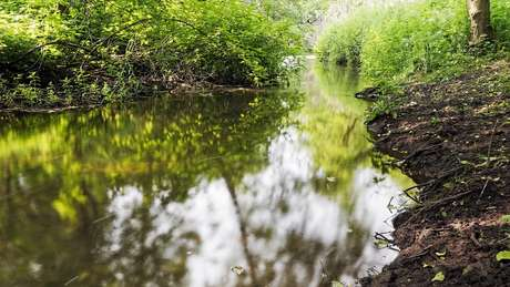Lei também determina preservação de áreas ecologicamente sensíveis, como nascentes e margens de rios