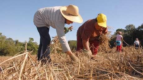 Cerca de 4,7 milhões de imóveis rurais já fizeram o Cadastro Ambiental Rural (CAR)   Foto: Hedeson Alves/Governo do Paraná