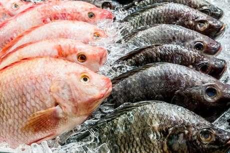 Peixes frescos: saiba escolher