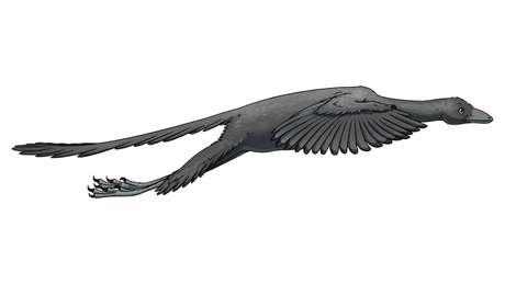 Ilustração artística mostra o Arqueoptérix em voo   Ilustração: Jana Růžičková