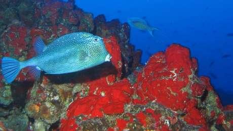 A reserva tem 40 tipos de moluscos, 28 de esponjas, 87 de peixes de mar aberto, 17 de tubarões e 12 de golfinhos e baleias (Crédito: João Luiz Gasparini/Divulgação)