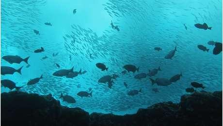 O Ministério do Meio Ambiente enviará um decreto à Presidência para a criação de uma unidade de conservação em torno da cordilheira (Crédito: João Luiz Gasparini/Divulgação)