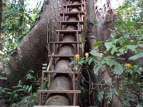7- Escada de casa na árvore.