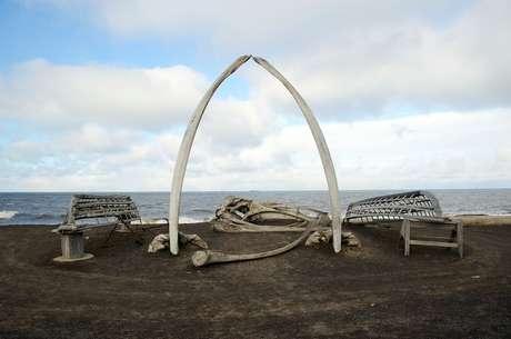 Baleias-da-groenlândia foram caçadas comercialmente por causa de sua grossa capa de gordura