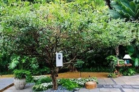 16. Jardim com árvore, plantas diversas e flores. Projeto de Alalou Paisagismo