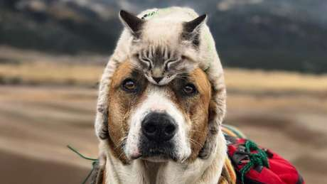 A amizade de Baloo (o gato) e Henry (o cachorro) conquistou meio milhão de seguidores no Instagram