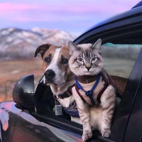 O gato Baloo, que veste uma guia nas caminhadas, gosta de explorar as paisagens tanto quanto o cachorro Henry