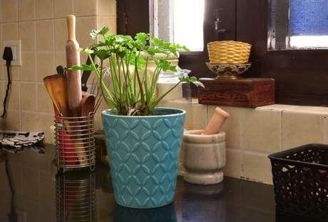 Como cuidar das sua plantas: controle da água