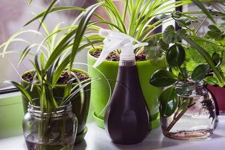 Vasos de plantas perto da janela