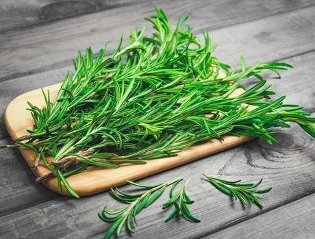 Plantas medicinais para ter em casa: alecrim