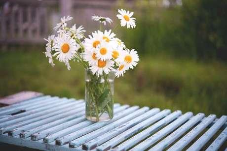 Plantas medicinais para ter em casa: camomila