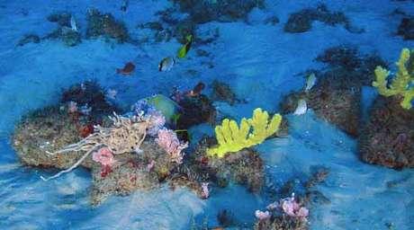 Recife amazônico abriga mais de 40 espécies de corais, 60 de esponjas 70 de peixes, além de lagostas e estrelas-do-mar