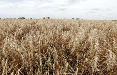 Plantação de trigo com ceifera debulhadora colhendo o cereal ao fundo 18/12/2012 REUTERS/Enrique Marcarian
