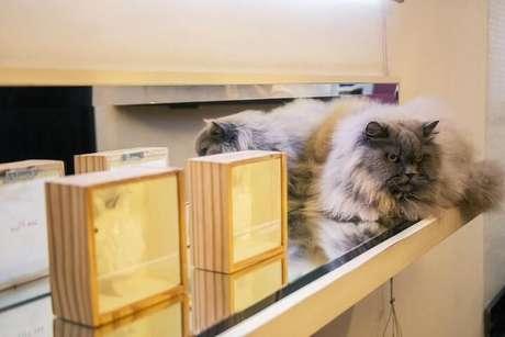 21. Prateleira de vidro sobre aparador com objetos decorativos. Projeto de Casa Aberta