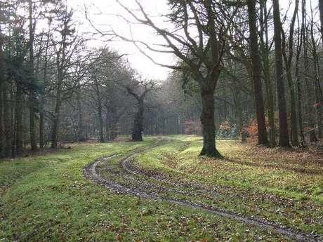 Floresta de Whippendell, na Inglaterra