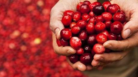 Benefícios da frutinha vermelha ainda são alvo de debate na ciência