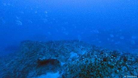 Os corais da Amazônia na Guiana Francesa: eles cobrem uma área de cerca de 56 mil quilômetros quadrados
