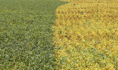 Vista de plantação de soja em Primavera do Leste, no Mato Grosso, Brasil 07/02/2013 REUTERS/Paulo Whitaker