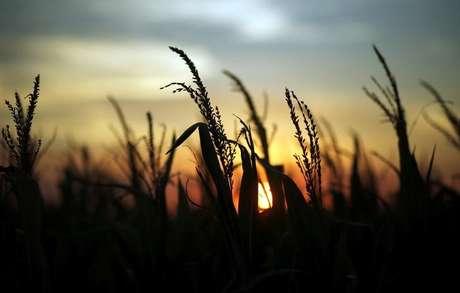 Plantação de milho 10/04/2018 REUTERS/Marcos Brindicci
