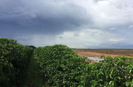 Plantação de café em São Desidério, na Bahia 21/03/2018 REUTERS/Roberto Samora
