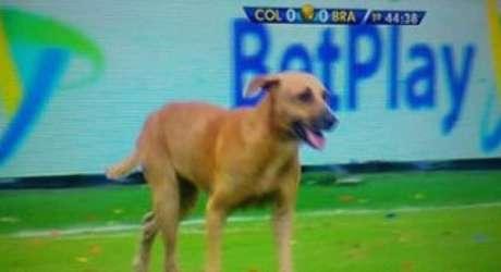 Cachorro invade jogo Brasil X Colômbia