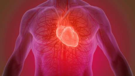 Curativo vivo para o coração? Cientistas estudam alternativas para 'remendar' danos causados por ataque cardíaco