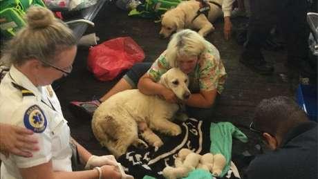 A dona de Ellie abraça a cachorra enquanto os filhotes descansam