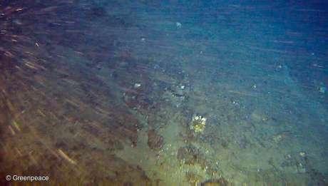 Banco de rodolitos coberto por algumas esponjas-do-mar descobertos dentro do bloco onde a Total quer explorar petróleo. Eles estão a 180 metros de profundidade e 120 km da costa brasileira.