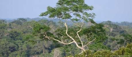 Organizações apontam ofensivas que vêm prejudicando a Floresta Amazônica
