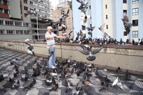 Multa por alimentar pombos em SP pode chegar a R$ 400 em caso de reincidência