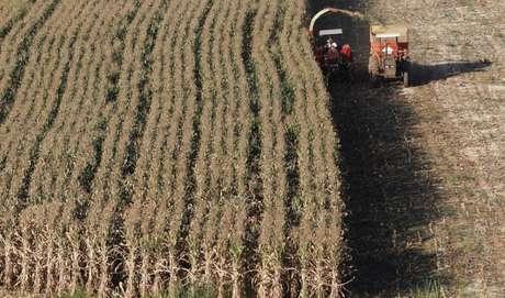 Plantação de milho em Santo Antônio do Jardim 06/02/2014 REUTERS/Paulo Whitaker