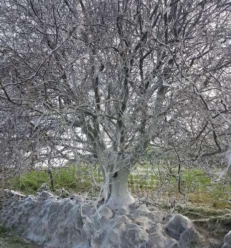 Policial afirmou que árvore foi uma das coisas mais estranhas que já testemunhou durante a carreira