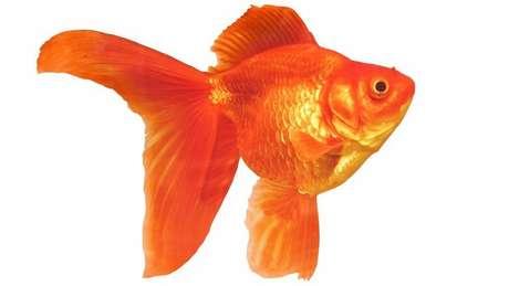 Segundo biólogo, o buraquinho na orelha poderia ser até mesmo um remanescente das brânquias dos peixes, mas poucos estudos foram feitos sobre o tema