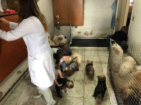 Os mais de 100 cachorros foram colocados aos cuidados do Projeto Anjo de Quatro Patas