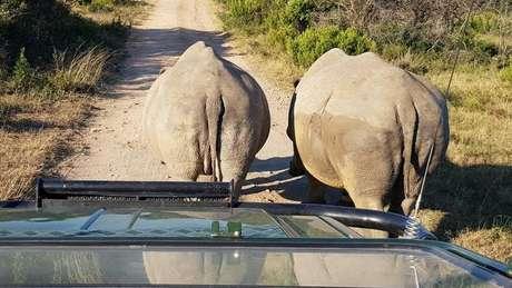 A reserva Sibuya perdeu três rinocerontes para caçadores ilegais em 2016