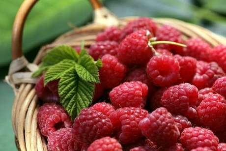 Framboesas: as deliciosas raspberries